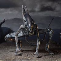 Alien-covenant-xenomorph.jpg